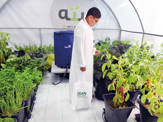 different types of plants and a person in white dress